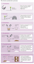 Overview of the heroin production process